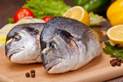 Dorado Fische Stockbild