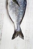 Dorado-Fische Stockbilder