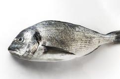 Dorado-Fische auf weißem Hintergrund lizenzfreies stockfoto