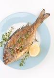 Dorado-Fische mit Thymian Lizenzfreie Stockbilder