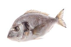 Dorado fish. Isolated on white background Royalty Free Stock Photos