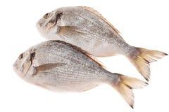 Dorado fish. Isolated on white background Royalty Free Stock Photography