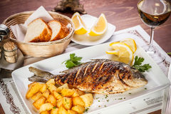 Dorado fish Royalty Free Stock Image