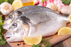 Dorado fish on board Stock Photography