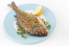 Dorado fish with Fresh Thyme Stock Images