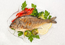 Dorado fish with Fresh Thyme Royalty Free Stock Photography