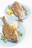 Dorado fish with Fresh Thyme Royalty Free Stock Image