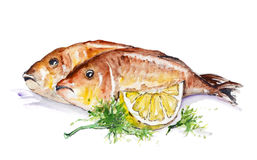 Dorado fish. Fried on the grill with lemon and parsley isolated. Handmade watercolor painting illustration on a white paper art background Stock Image