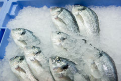 Dorado fish on ice Stock Photography