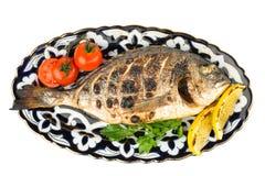 Dorado fish . isolated Royalty Free Stock Photography