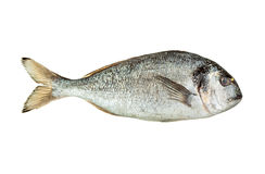 Dorado fish isolated. Over white background Stock Photos