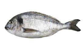 Dorado fish. Isolated on white background Stock Image