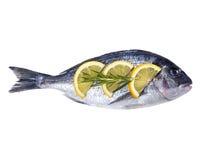 Dorado fish isolated on white. Background Stock Photo