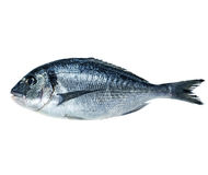 Dorado fish isolated on white Royalty Free Stock Image
