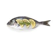 Dorado fish isolated on white. Background Royalty Free Stock Photography