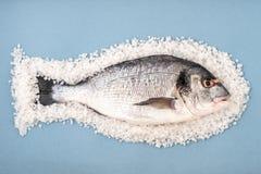 Dorado fish on a large sea salt on a light blue background. Royalty Free Stock Images