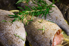 Dorado fish with lemon and spices. Cooking Dorado fish with lemon and spices royalty free stock photography