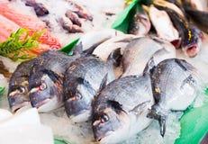 Dorado on fish market Stock Image