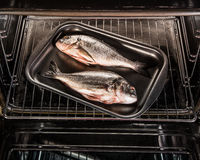 Dorado fish in the oven. Stock Images