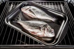 Dorado fish in the oven. Stock Photo