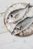 Dorado fish and sea bass on the metal plate with ice. On the white wooden table Royalty Free Stock Photos