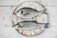 Dorado fish and sea bass on the metal plate with ice. On the white wooden table Royalty Free Stock Image