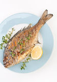 Dorado fish with Thyme Royalty Free Stock Images