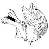Dorado Fish Vector Illlustration Stock Photo