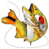 Dorado Fish Vector Illustration. Colorful Dorado jumping with a lure on the mouth - Vector illustration. Vector format made with layer for an easy edition Stock Photography