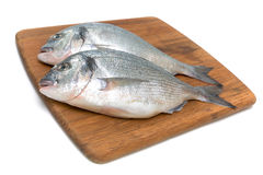 Dorado fish on a white background Stock Photography