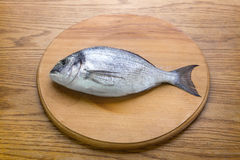 Dorado fish on a wooden board top vew Royalty Free Stock Images