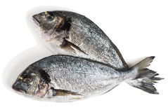 Dorado Fishes, Above View. Stock Images
