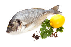 Dorado fisk Royaltyfri Fotografi