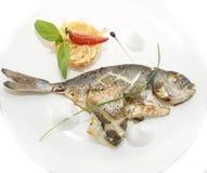 Dorado fisk Arkivfoto