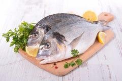 Dorado fisk Royaltyfri Bild