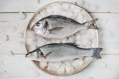 Dorado fisk och havsbas på metallplattan med is Royaltyfri Bild