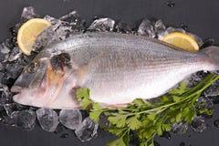 Dorado fisk på is Arkivfoto