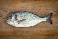 Dorado fisk på trä Arkivfoton