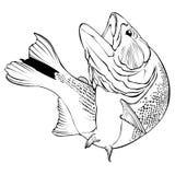 Dorado fiskvektor Illlustration royaltyfri illustrationer