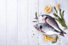 Dorado frais de poisson cru Images libres de droits