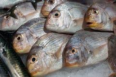 Dorado fresh fish on ice Royalty Free Stock Photo