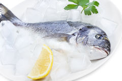 Dorado on ice Stock Image
