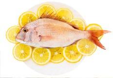 Dorado met een citroen Stock Foto's