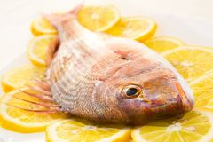 Dorado On A Lemon Royalty Free Stock Photo