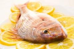 Dorado op een citroen Royalty-vrije Stock Foto