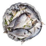 Dorado ryba na talerzu Zdjęcie Royalty Free