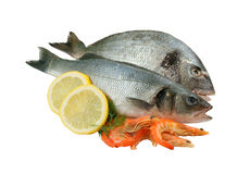 Dorado, seabass and shrimp Royalty Free Stock Photography