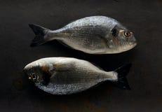 Doradovissen op de steen stock foto's
