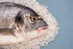 Doradovissen op een groot overzees zout close-up op een lichtblauwe backgro Stock Foto's