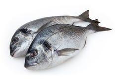 Doradovissen op witte achtergrond worden geïsoleerd die Royalty-vrije Stock Foto's